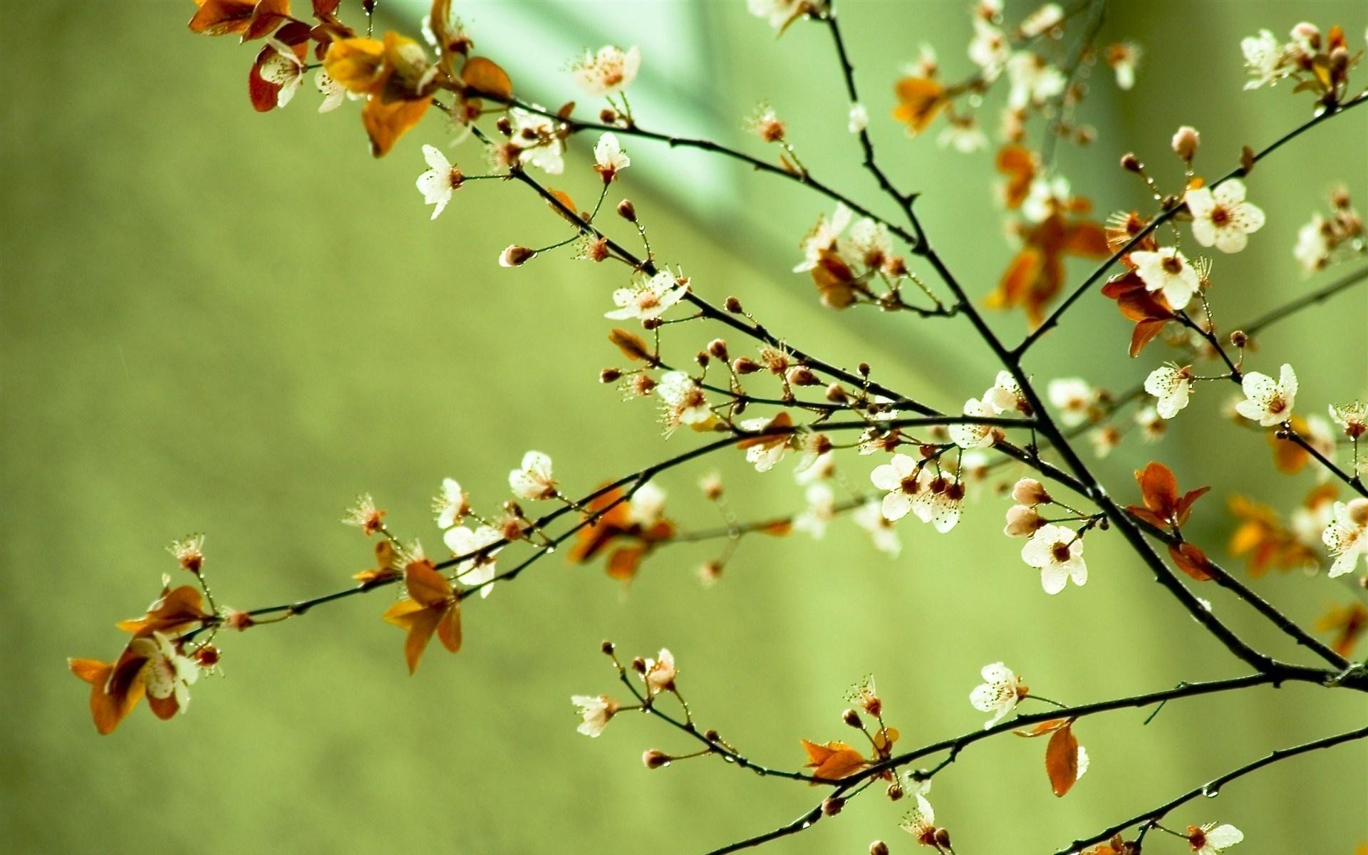 springtime hd backgrounds