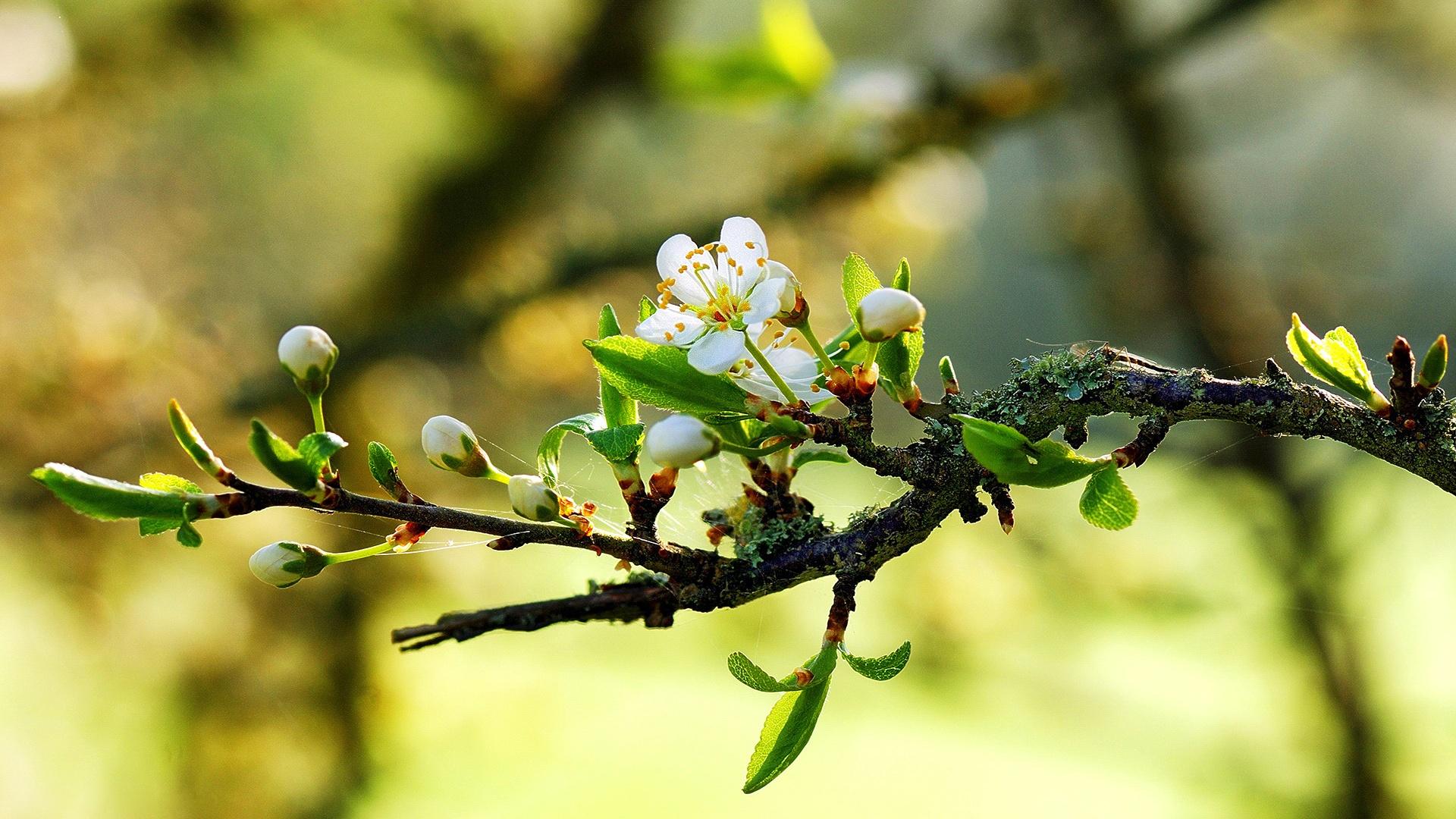 springtime hd