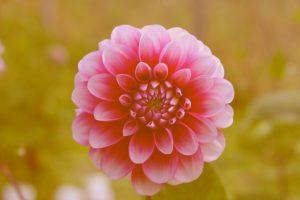 summer beautiful flowers
