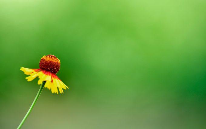 summer flower download