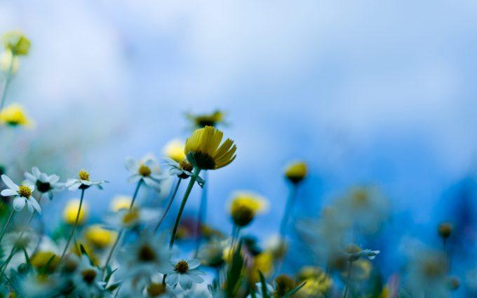 summer flowers A2