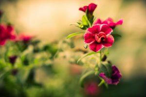 summer flowers cool