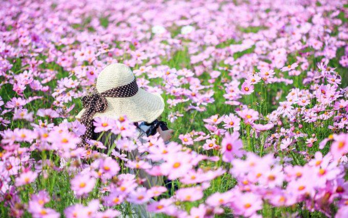 summer flowers field girl mood