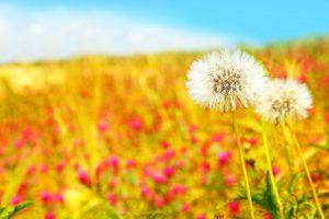 summer flowers wallpaper A3