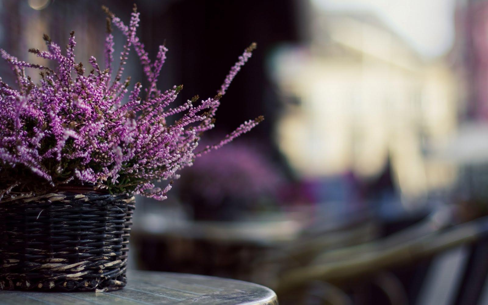 table flowers desktop backgrounds