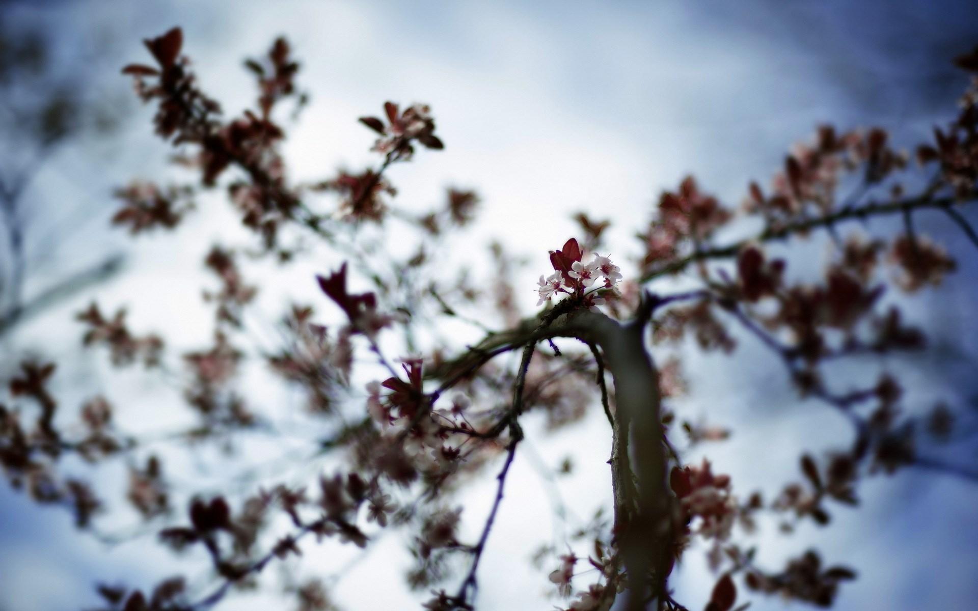 tree sky flowers spring nature