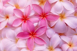 tropical flowers background A1