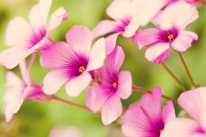 tropical flowers hd