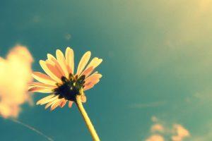 tumblr flower background