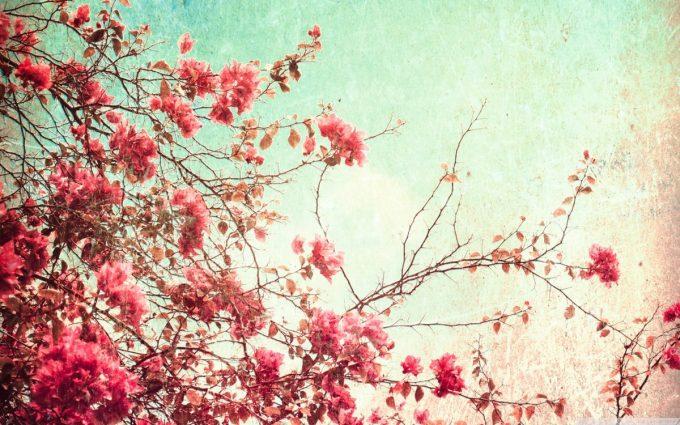 tumblr wallpaper free
