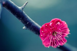 twig flower pink