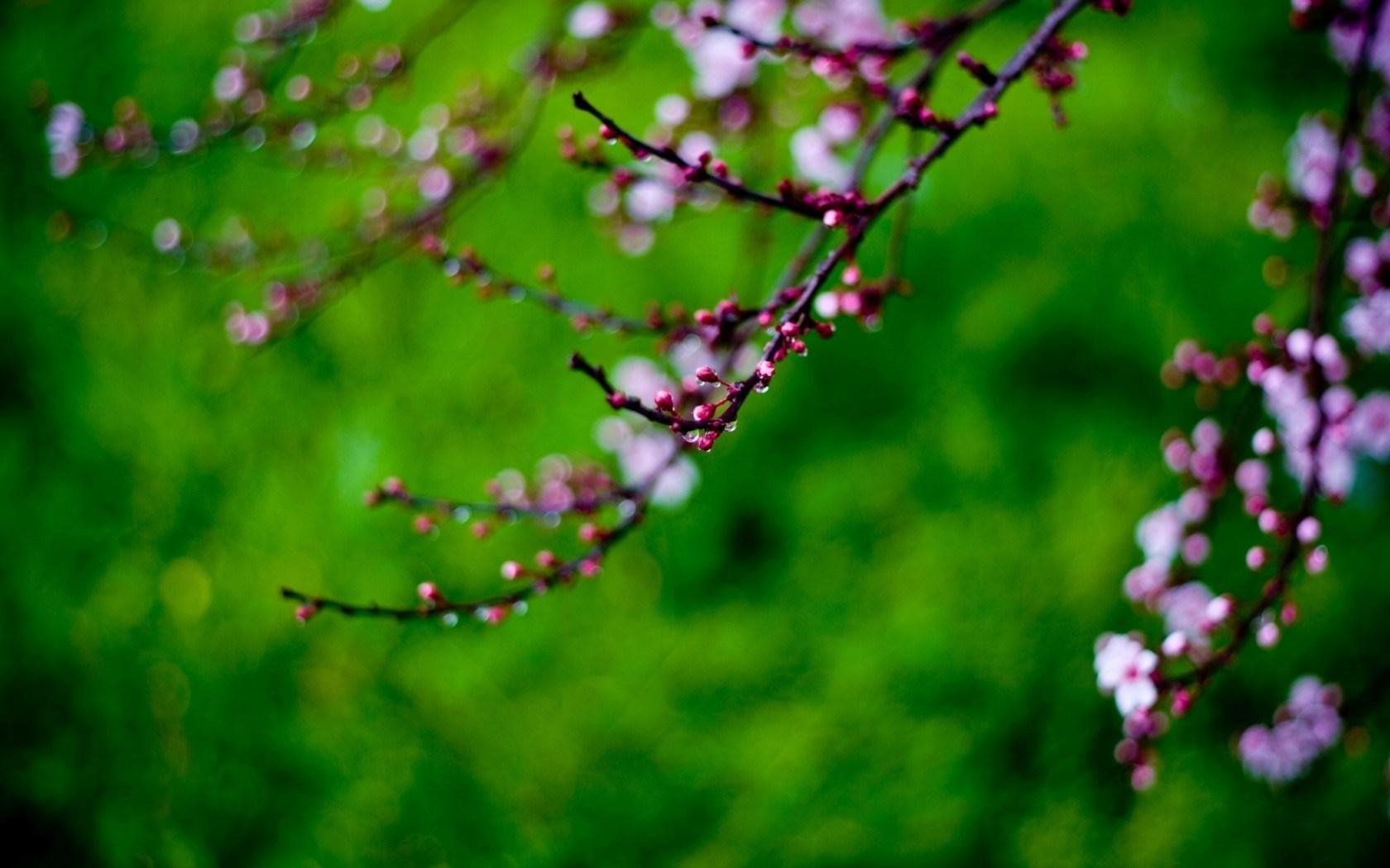 twigs flower spring tree