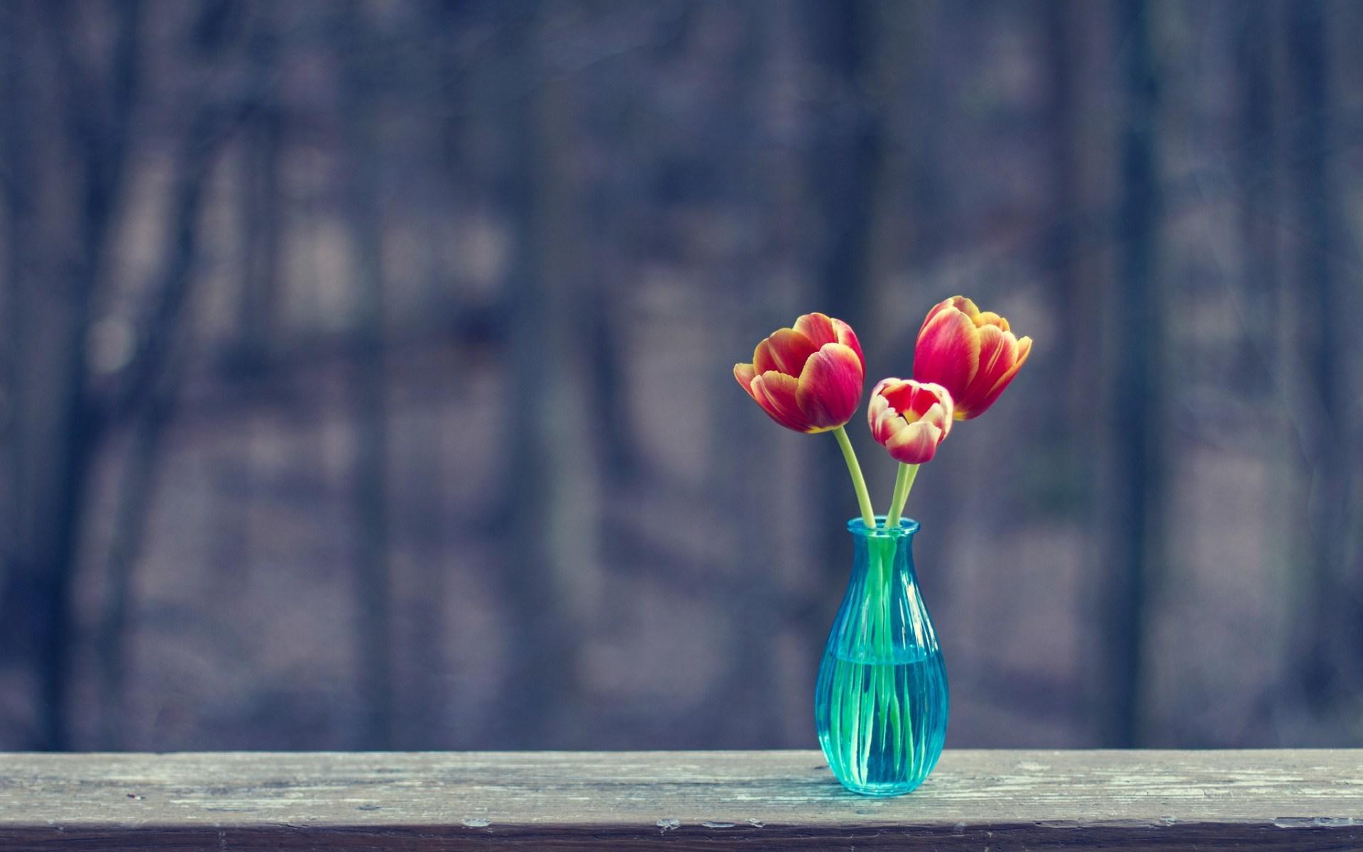 vase tulips three flowers