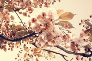 vintage flowers 1080p