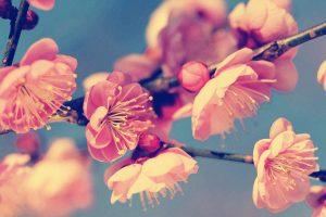 vintage flowers A2