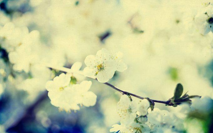 vintage flowers A5