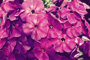 vintage flowers A6