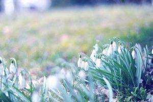 vintage flowers hd