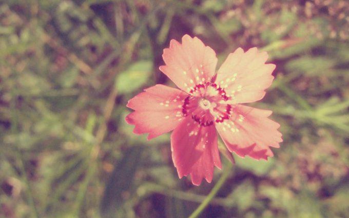 vintage flowers images