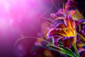violet flower wallpaper A5