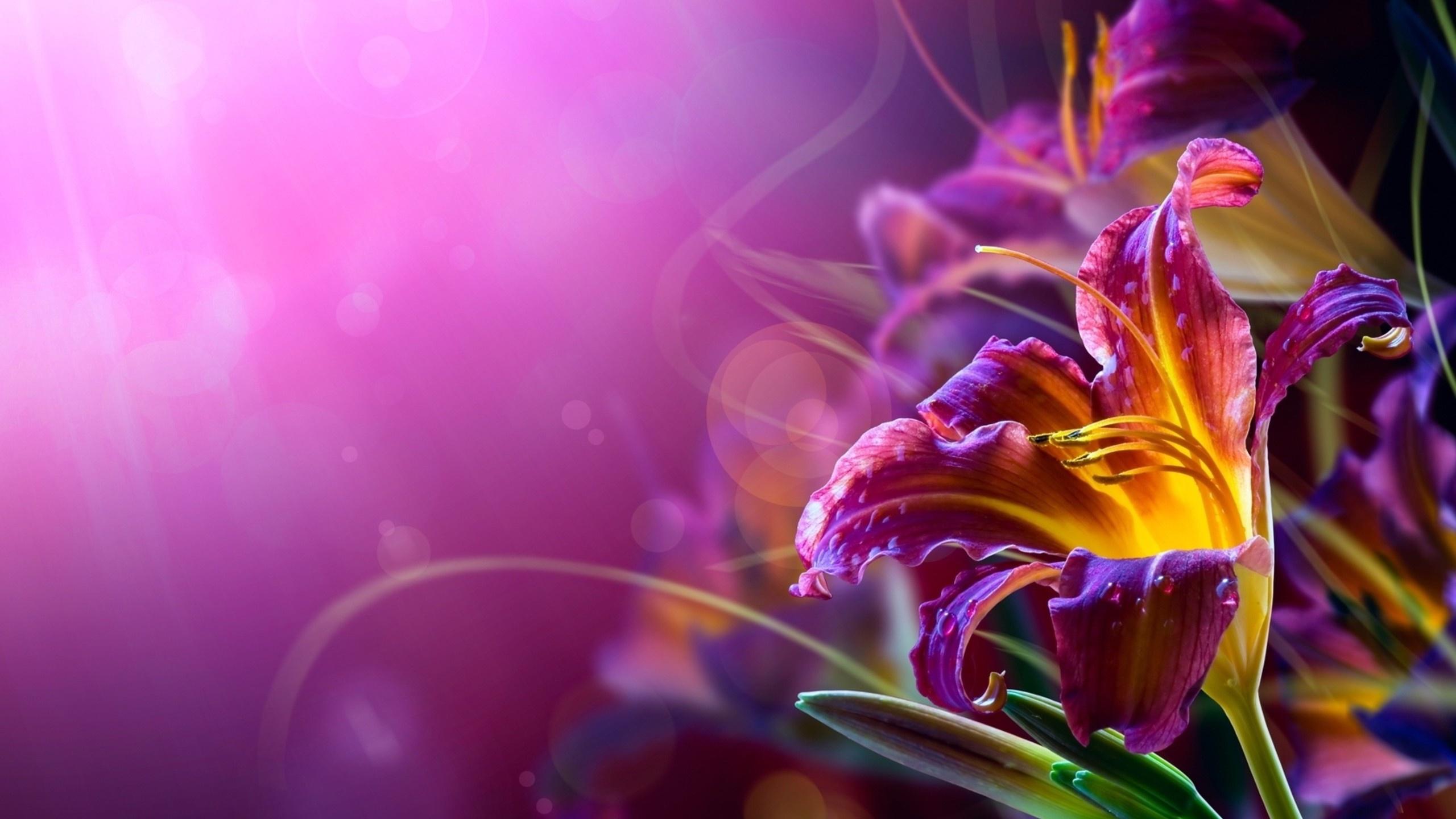 violet wallpaper A3