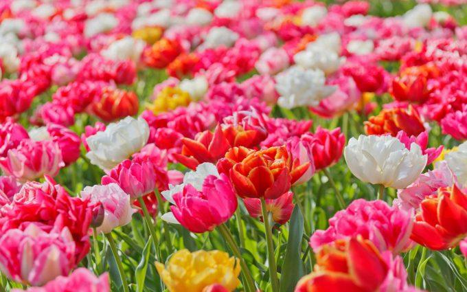 vivid flowers 1080p