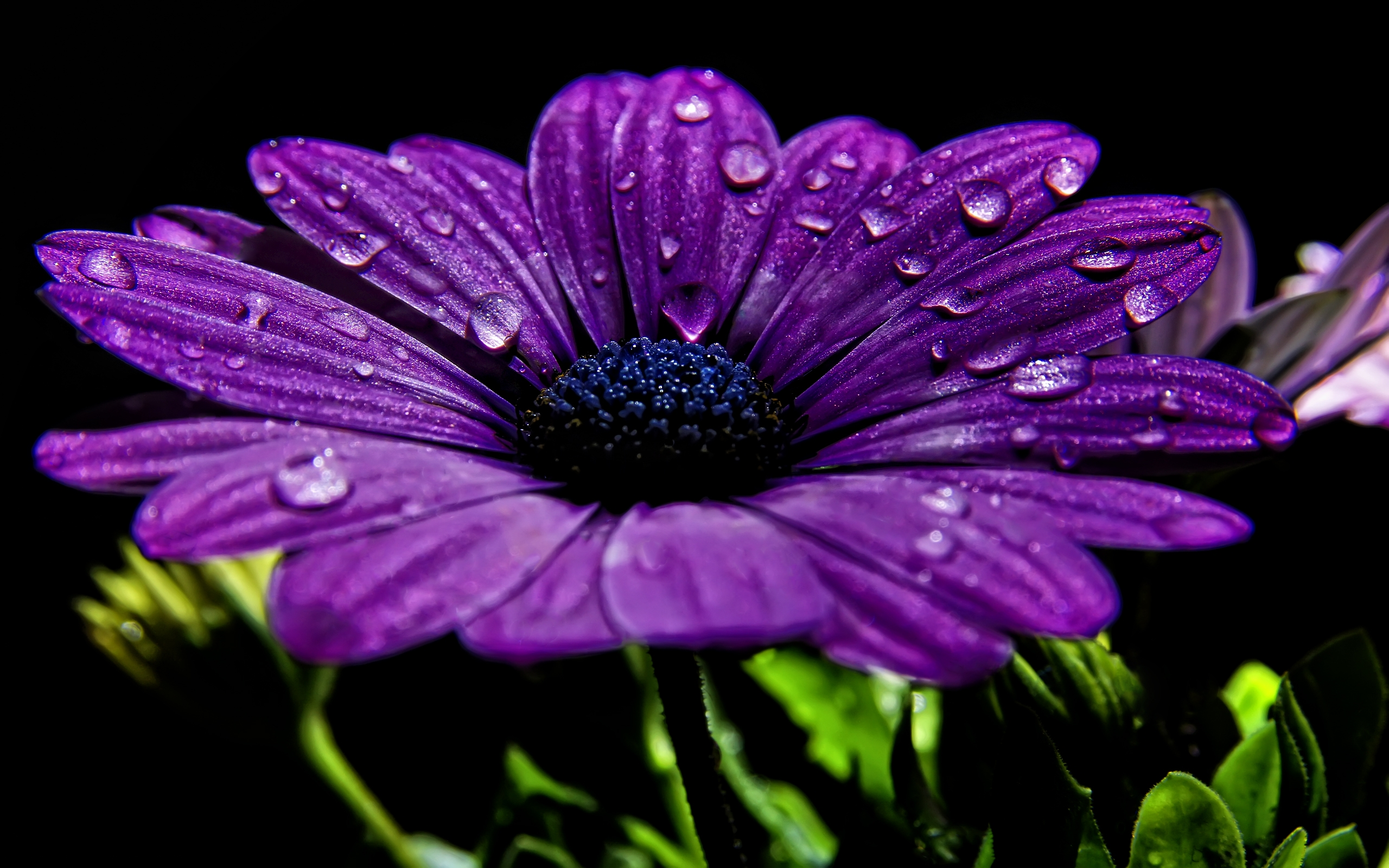 wallpaper flowers purple
