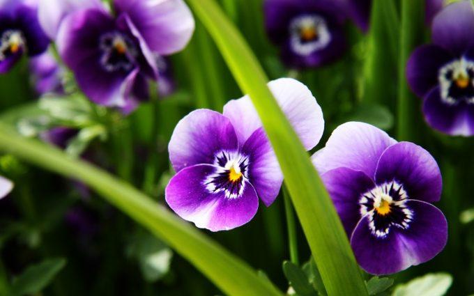 wallpaper purple floral