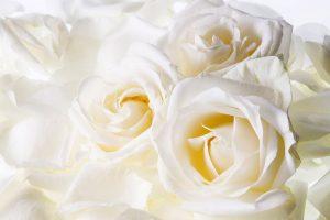 wallpaper white flower