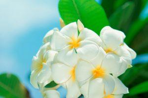 wallpaper white flowers