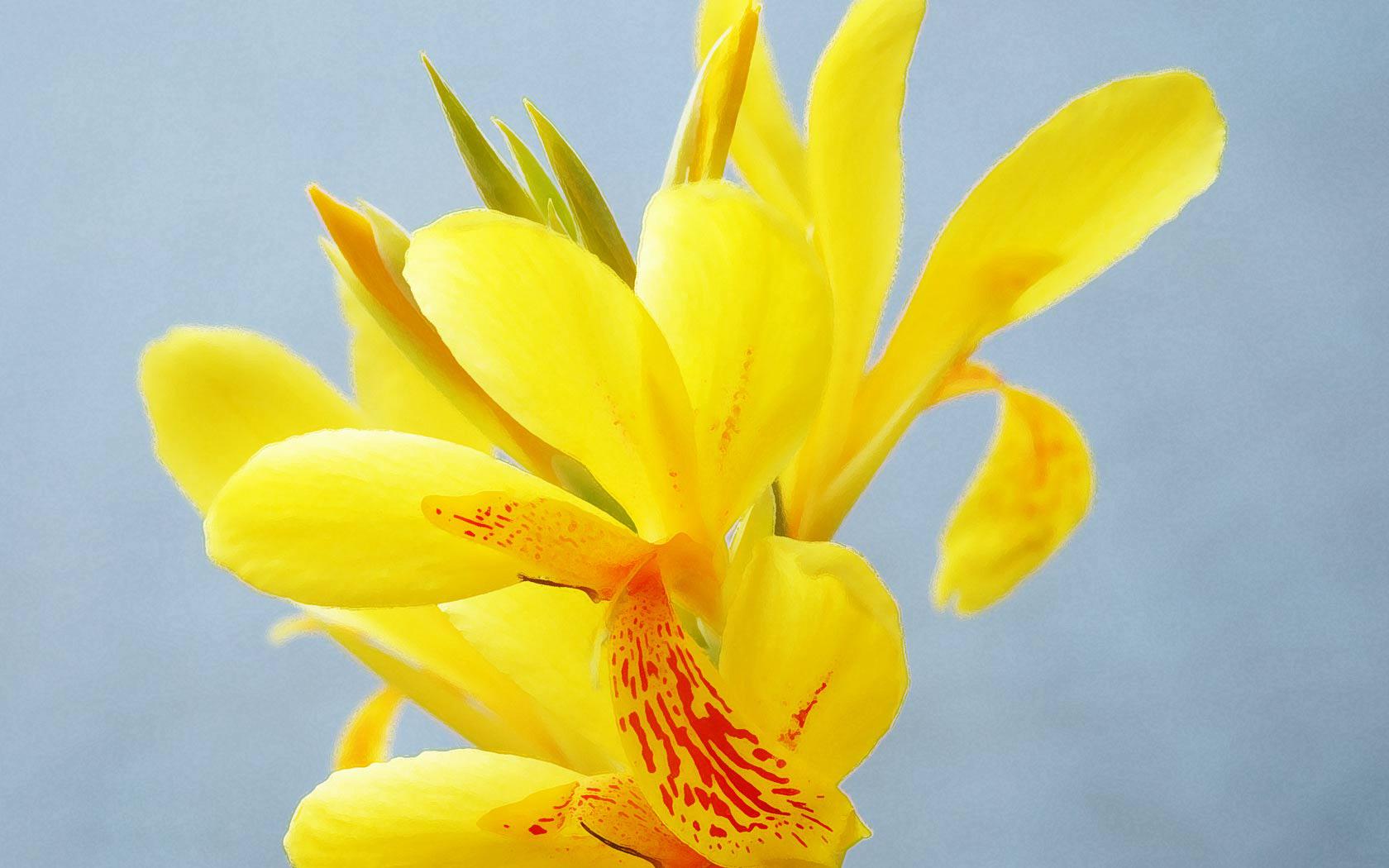 wallpaper yellow flowers