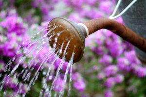 watering can water flowers summer