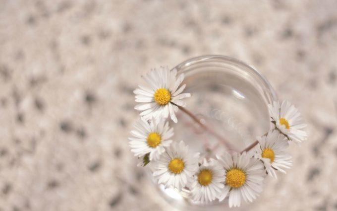 white daisies A4