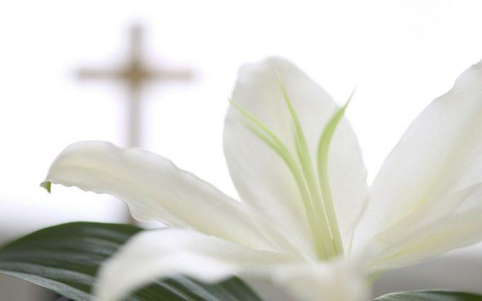 white lilies wallpaper