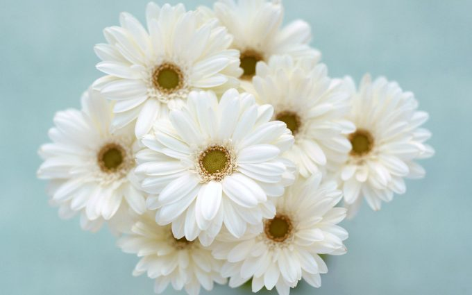 white wallpaper with flowers