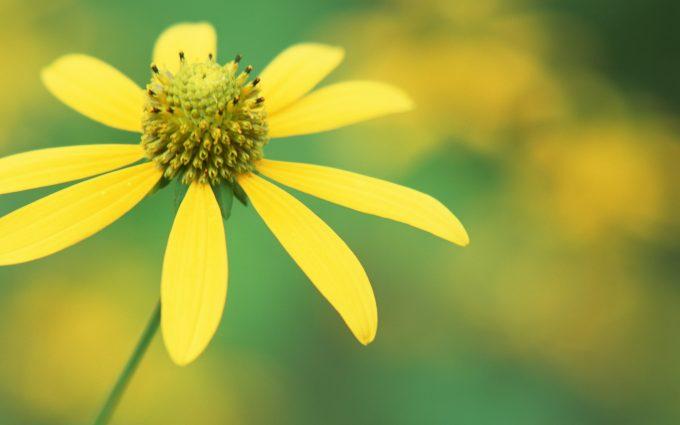wildflower hd