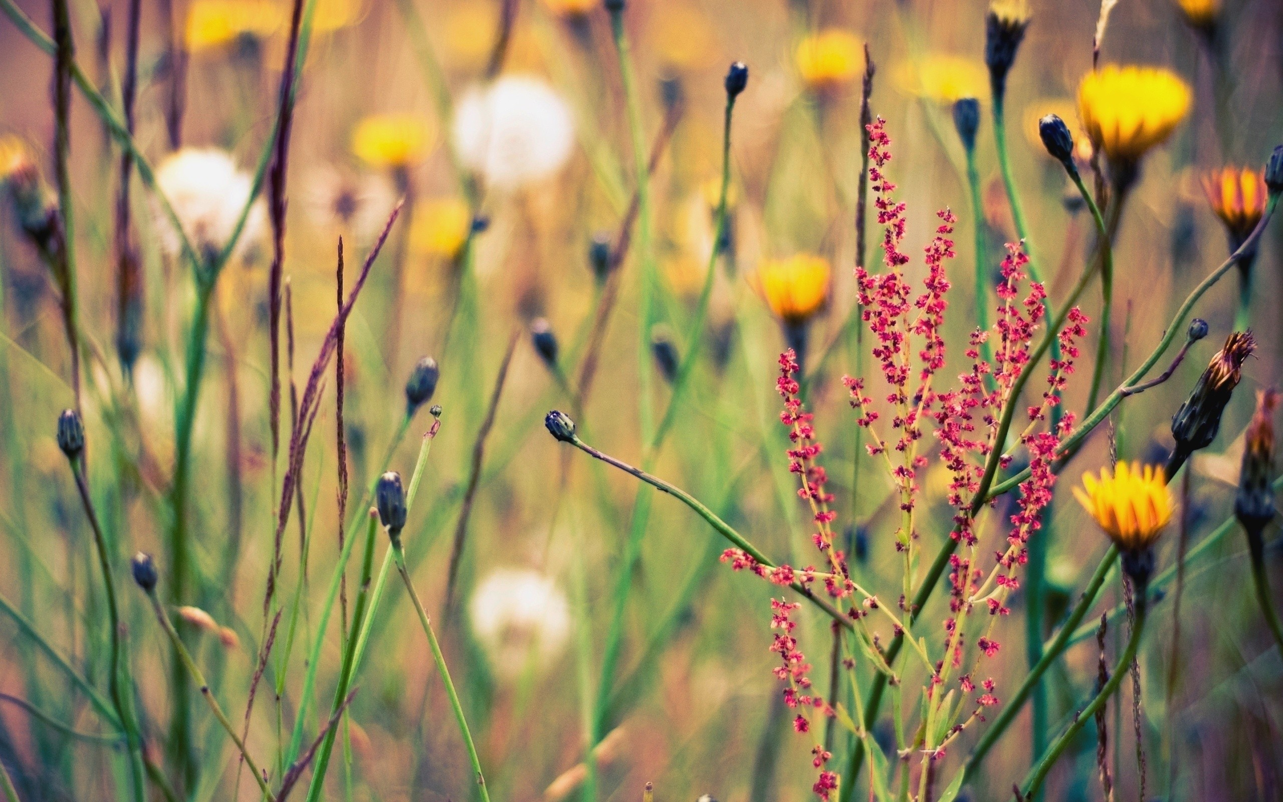 wildflower wallpaper magnificent