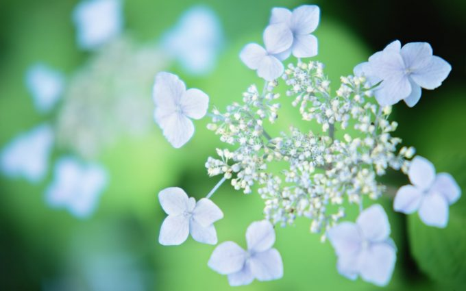 wildflower wallpapers 1080p