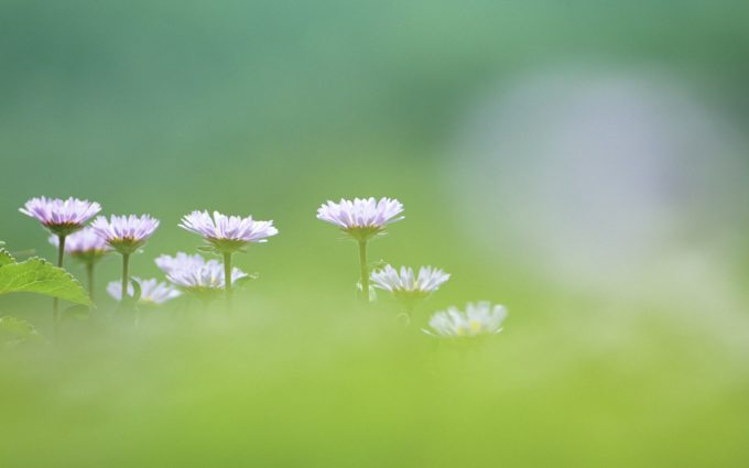 wildflower wallpapers A1