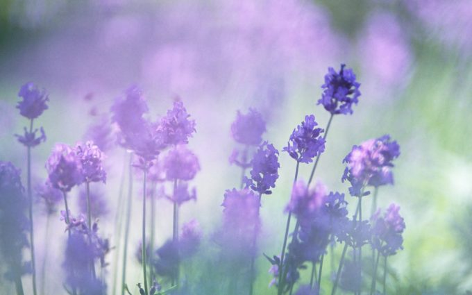 wildflower wallpapers background