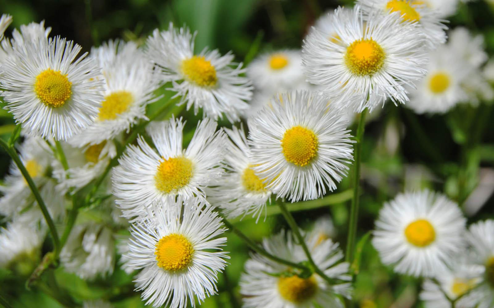 wildflowers A1