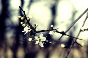 winter flower  background