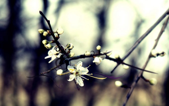 winter flower  background