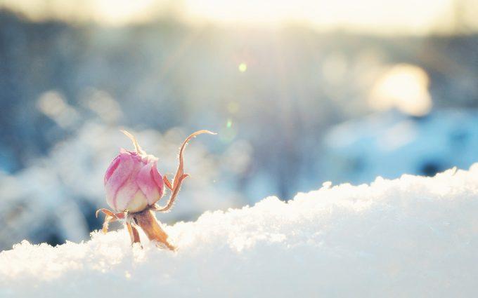 winter flower cool