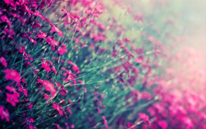 winter flower download