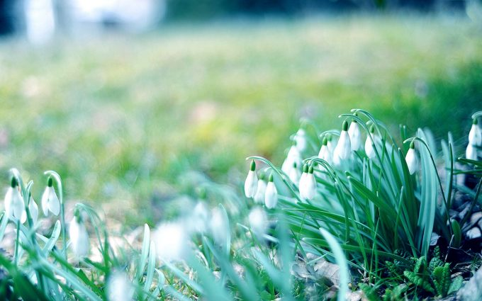 winter flower grass