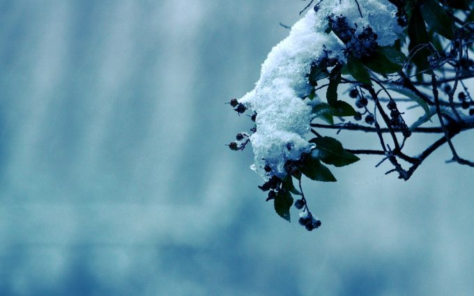 winter flower picture