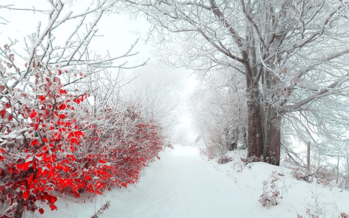 winter flowers A2