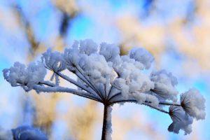 winter flowers A5