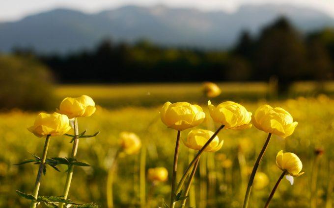 yellow bokeh landscape